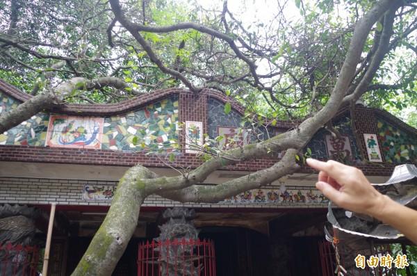 萬靈廟屋頂被倒伏樹幹壓住出現破損。(記者王善嬿攝)