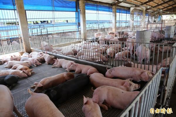 中國自本月初起爆發嚴重非洲豬瘟疫情,目前包含黑龍江、吉林、河南、江蘇、浙江、安徽等省份都有疫情發生,疫情持續由北往南擴散。圖為示意圖,與新聞事件無關。(資料照)