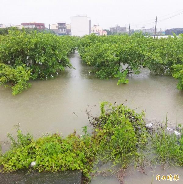 農產中,主要受損作物為番石榴,損失金額2472萬元。圖為高雄芭樂田嚴重泡水。(資料照)