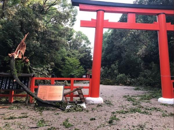 下鴨神社內部有大量斷枝落葉。(圖擷取自Twitter)