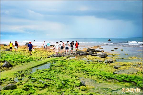 八月小琉球不斷因雨中斷交通,但仍有不少遊客趁雨停空檔到潮間帶遊玩。(記者陳彥廷攝)