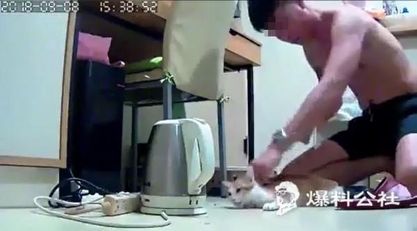 男用拳頭揍貓。(擷取自爆料公社)