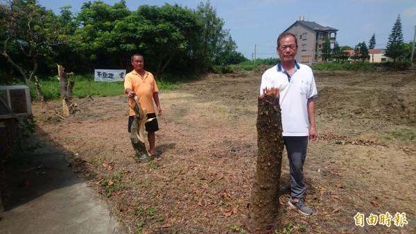 綠能公司在井仔腳庄正中央「種電」,整地卻先砍樹,令居民氣憤。(記者楊金城攝)