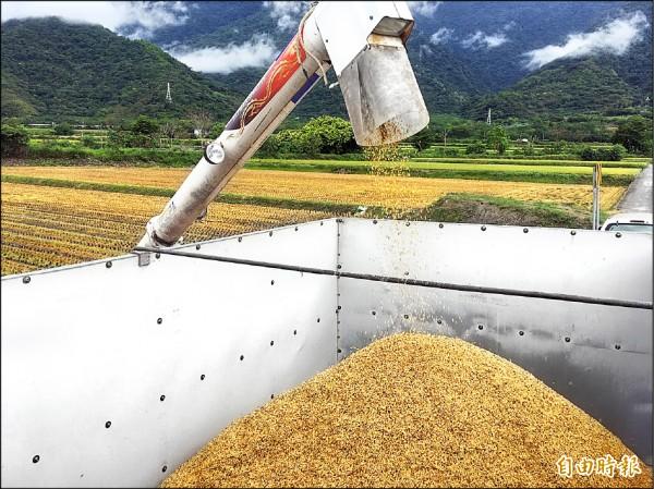稻作收成後,稻稈、米糠都可再利用製成堆肥。 (記者張存薇攝)