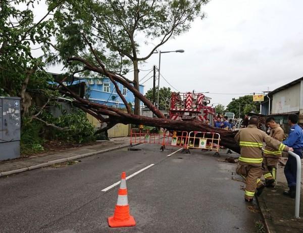 山竹過後2天,香港還有多條主幹道未修復封閉中。(香港星島日報)