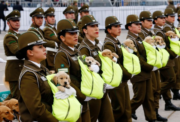 智利閱兵典禮上除了有武力展示,還有可愛的小狗。(路透)