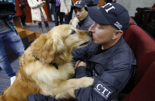 一隻名叫西蒙的警犬在「退休典禮」上向牠的馴犬員撒嬌。(美聯社)