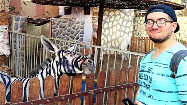 埃及園方否認以彩繪驢子冒充斑馬。(取自網路)