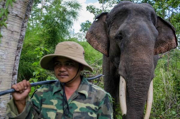 目前越南的大象總計僅剩180頭,當地商人販售的象尾毛及象牙產品已危及到大象的存亡數目。(法新社)