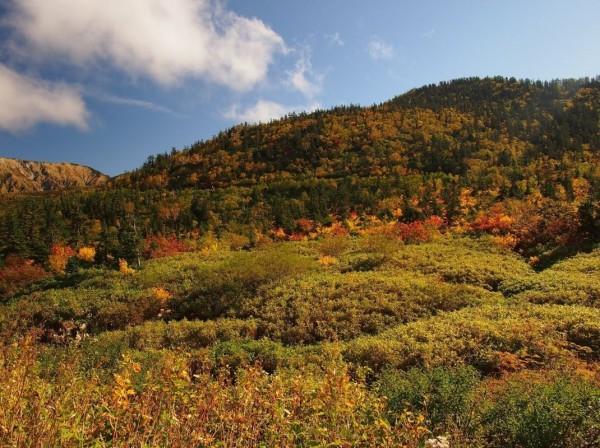 海拔較低,約1930公尺的彌陀原,也較往年快一些進入楓紅季節。(圖擷取自黑部貫光官網)