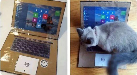 國外網友做了一台「假筆電」,結果成功騙過了貓咪。(圖擷取自9gag網站)