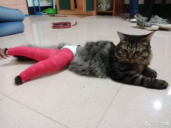 愛貓後腳受傷去包紮 回來竟成「性感美腿」