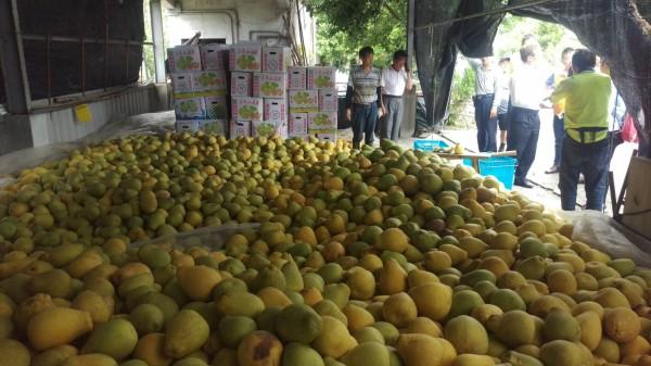 宜蘭縣冬山鄉老農何清和有3萬台斤文旦柚待售。(記者江志雄翻攝)