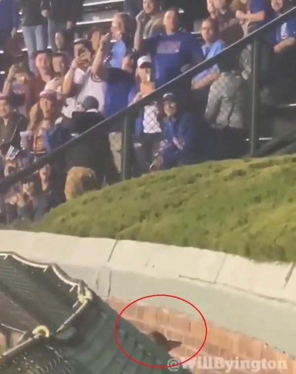 老鼠想跳上圍牆......球賽觀眾停止觀賽轉替老鼠加油喝采