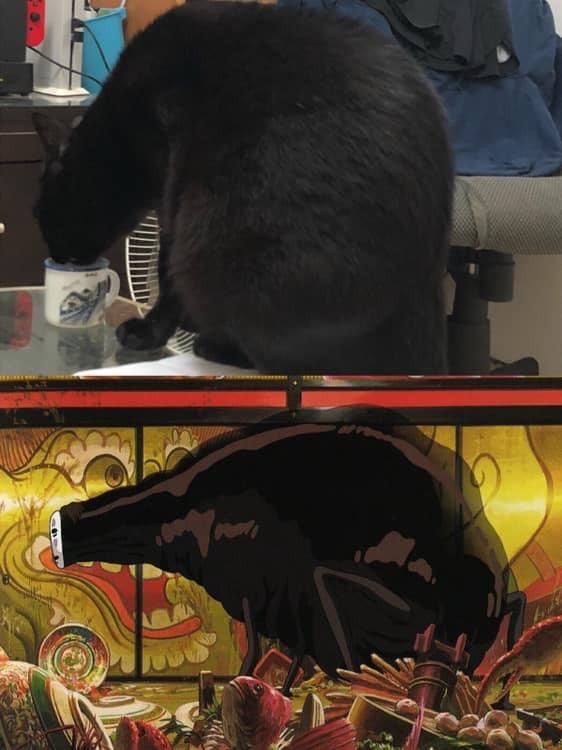 胖貓這張照激似神隱少女「無臉男」 奴才:我到底養了什麼