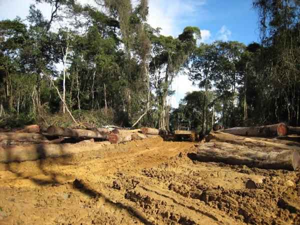 由於中國對於木材的需求無法滿足,南太平洋索羅門群島以比永續經營還快近20倍速度砍伐。示意圖。(法新社)