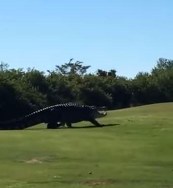 巨鱷丘布斯不常現身,為球場增添不少神祕感。(圖擷自Youtube)