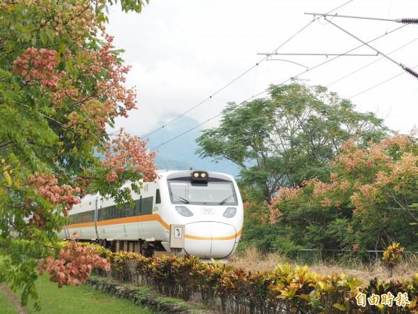 瑞和火車站是鹿野鄉內的無人車站,在社區維護下,兩旁成排的台灣欒樹吸引不少民眾取景拍照。(記者王秀亭攝)