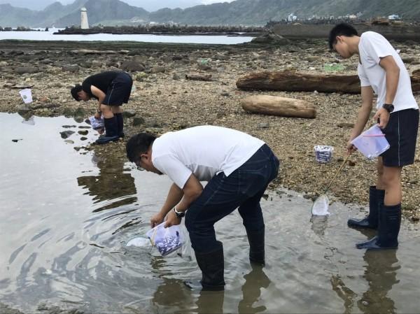 基隆潮境公園潮間帶千魚死亡,市府、海洋大學、海科館均派員採樣,了解魚是否被毒死。(圖為基隆市政府提供)