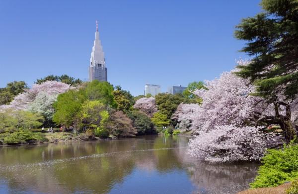 日本新宿御苑員工因不會說外語,不敢向外國遊客收費,造成園方嚴重虧損。(圖擷取自維基百科)