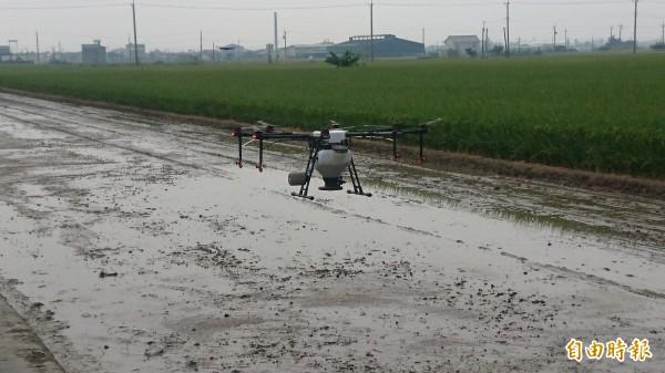 無人機在水田上方直播稻種。(記者楊金城攝)