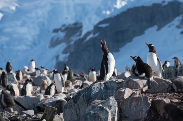 保護南極生態,全球265萬人連署呼籲成立「南極海洋保護區」。(綠色和平提供)