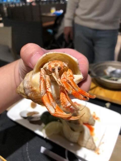 網友仔細檢查後才發現這個異常的海螺殼中住了一隻「寄居蟹」。(圖為PTT網友授權使用)