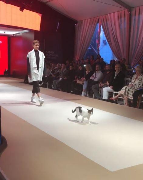 在2018年的ESMOD國際年會時裝秀上,一隻貓亂入伸展台,上演真正的「貓咪走台步」。(圖截取自Instagram)
