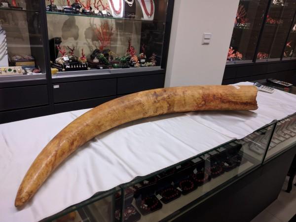 一名台灣女子外返台時,被海關發現攜帶象牙雕刻品,經驗定後確定為現生象的象牙,依法送辦。示意圖,與本新聞無關。(資料照)
