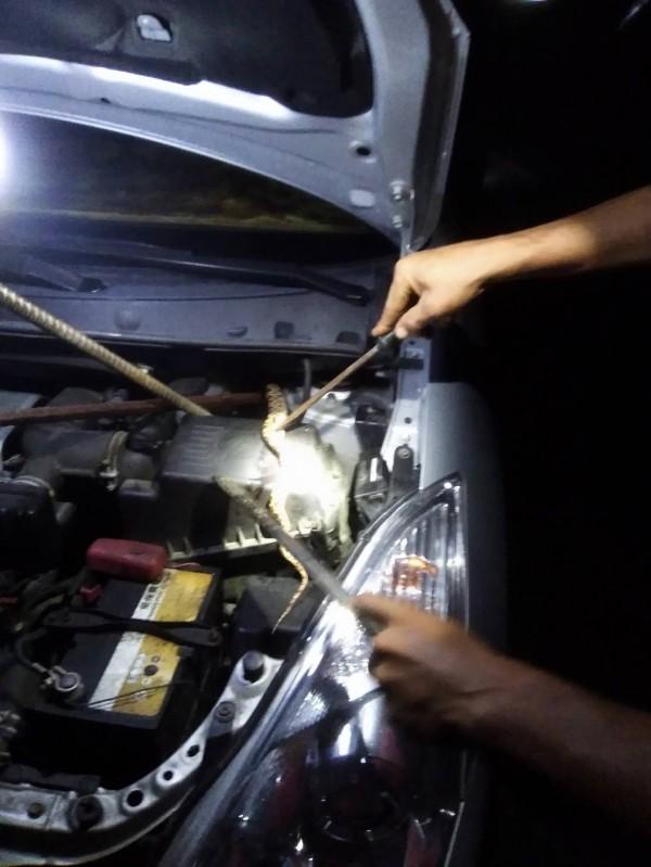 簡婦一家人合力捕捉竄躲在廂型車引擎室裡的龜殼花。(簡婦提供)