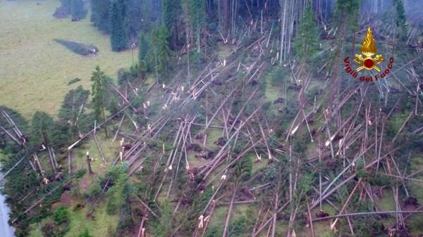 強風摧毀北義大利地區多達1400萬棵樹木。(美聯社)