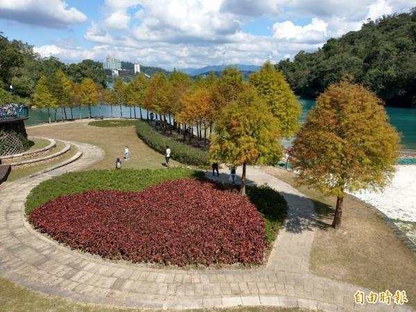 日月潭向山遊客中心前的婚紗廣場,種植的落羽松都已轉成褐紅色,為潭區增添色彩。(記者劉濱銓攝)