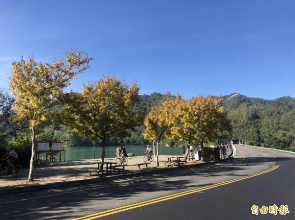 日月潭知名景點水社壩,種植的黃金楓都已轉黃,景色相當美麗。(記者劉濱銓攝)