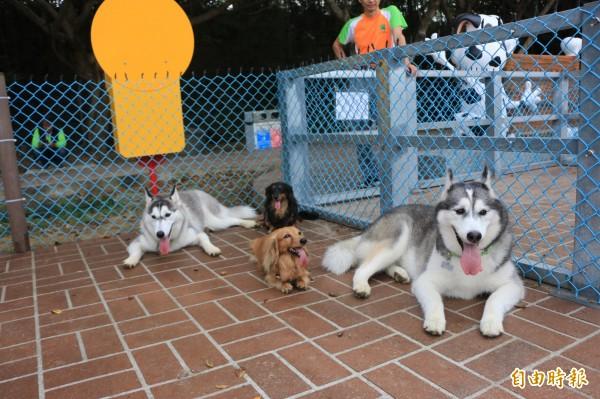 寵物友善空間設施完善,每隻狗兒都玩得不亦樂乎。(記者鄭名翔攝)