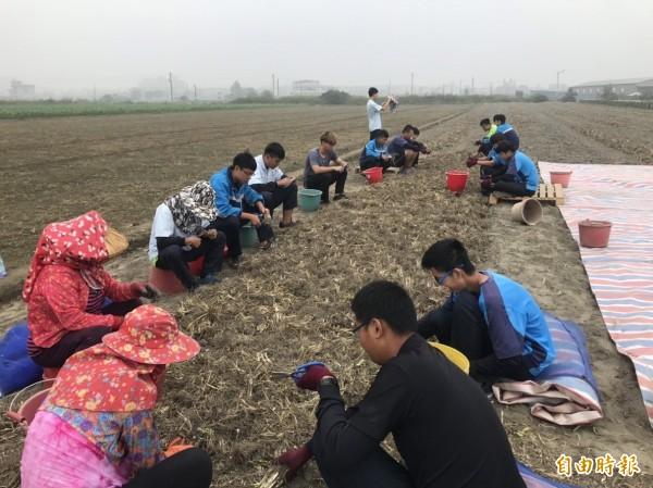 學生到花卉專區體驗夜來香種球採收的農務工作。(記者廖淑玲攝)