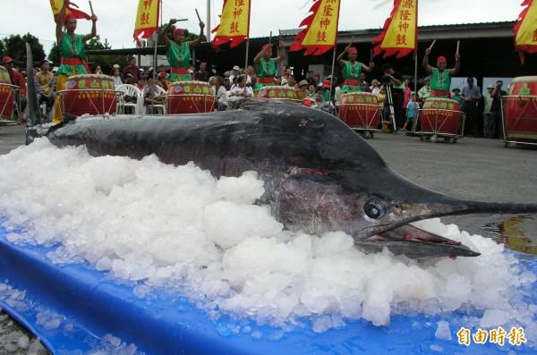 台東旗魚季鏢旗魚比賽中,一條原本有冠軍相的旗魚在被拉上船前,遭到鯊魚大咬一口少了20公斤,意外成為亞軍。圖為旗魚示意圖,並非本新聞被咬旗魚。(資料照)