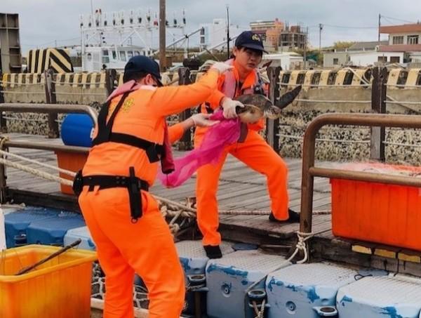岸巡七總隊安檢人員,將海龜救援至岸上。(岸巡七總隊提供)