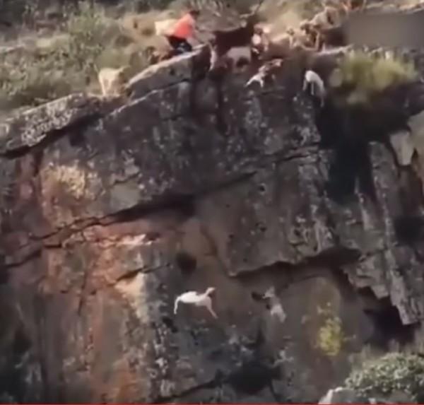 獵犬不斷摔下懸崖。(圖擷自「Video Break」YouTube)