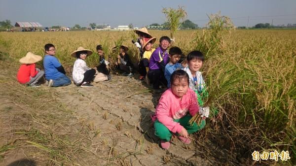 師生體驗手工割稻,並採用復古式的甩桶及腳踏式機器桶脫榖。(記者楊金城攝)
