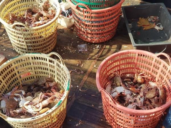 遭查獲的中國漁船,是捕蟹專用船。(澎湖海巡隊提供)