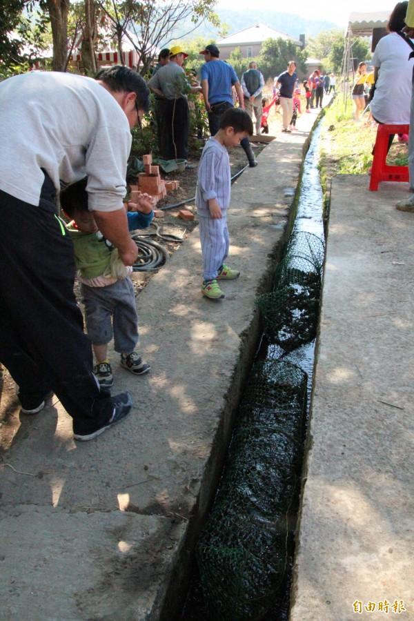 小朋友看到農圳內的螃蟹,好奇地索性蹲下來瞧個夠。(記者黃美珠攝)