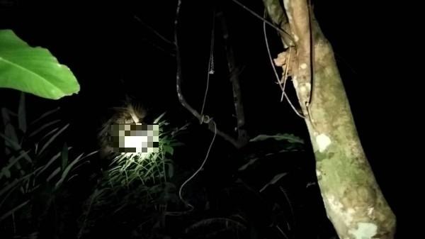 台北市立動物園陳姓技工在水池樹林區上吊身亡。(記者姚岳宏翻攝)