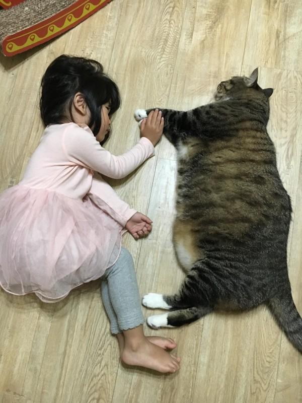 小女孩與貓咪情誼深厚,有網友認為「2個小朋友都很可愛」。(民眾提供)