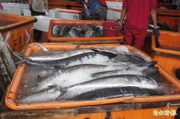 大盤魚販大量購買土〈加魚字旁〉魠,先清洗準備分類裝箱。(記者劉禹慶攝)