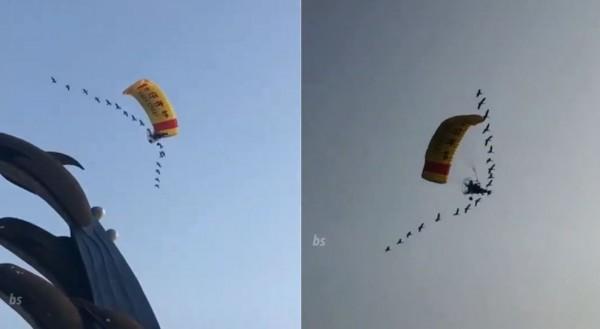 《返家十萬里》真人版!飛行傘玩家被雁群跟隨