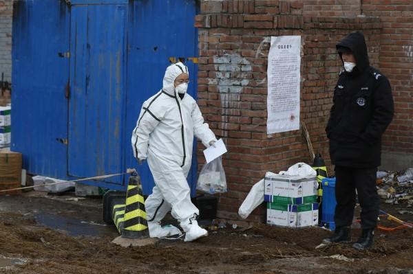 中國爆發非洲豬瘟情一發不可收拾,官方表示,餵食廚餘及生豬調運時消毒不徹底,是疫情傳播主因。(歐新社)