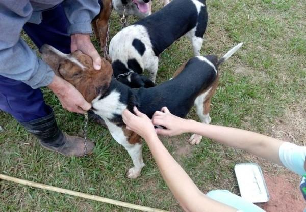 古坑、林內及斗六市屬狂犬病高風險區,請飼主帶犬貓施打疫苗。(記者詹士弘翻攝)