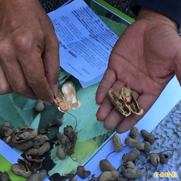 環團還帶來受到污染影響的農作。(記者楊綿傑攝)