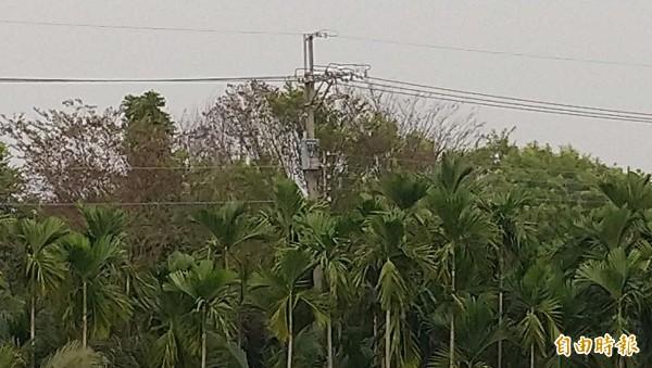 屏東許多檳榔上方都有電線經過,農民收割時應特別小心。照片內容與本新聞可件無關。(記者李立法攝)