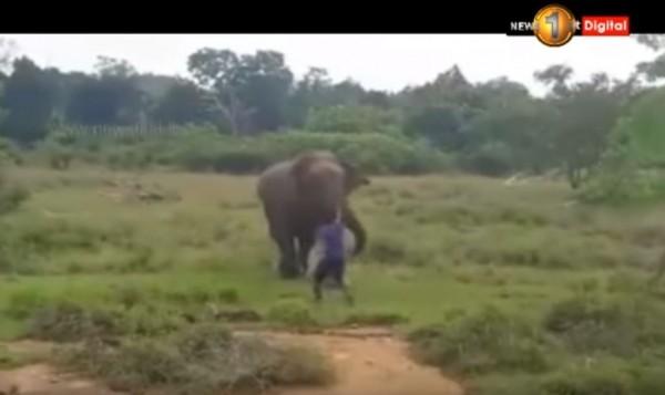 斯里蘭卡1名酒醉男子跑到野生大象面前挑釁,沒想到惹火大象,牠衝上前當場把這名醉漢活活踩死。(圖擷取自Youtube)